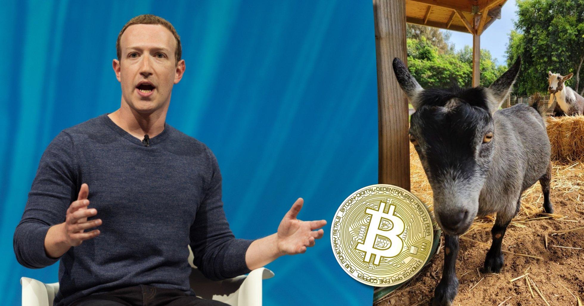 Mark Zuckerbergs ena get heter Bitcoin – det här kan det innebära