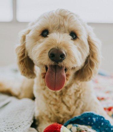 Voff! 17 gosiga, gulliga barnböcker för hundälskare