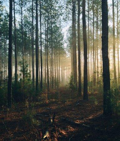 12 romaner med fantastisk vackra naturskildringar