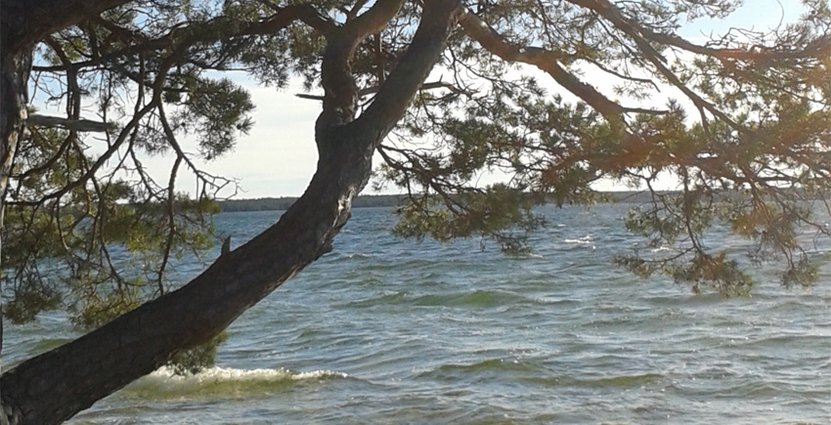 Nya nationalparken kan locka till Bästeträsk på norra Gotland.