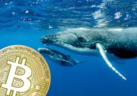 New data reveals: Number of bitcoin whales is at its highest since 2017 bull market
