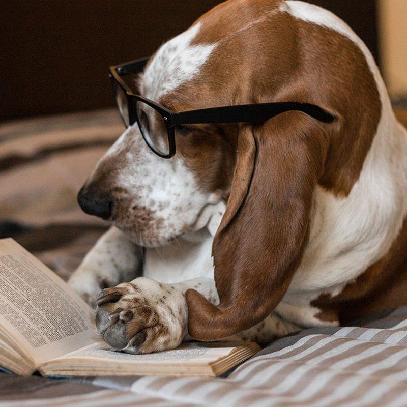 Redaktionens boktips: Det här läser och lyssnar vi på i april