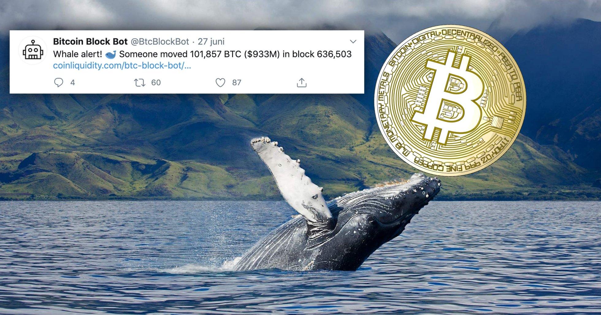 Mystisk val flyttade 87 miljarder i bitcoin – var största anonyma adressen