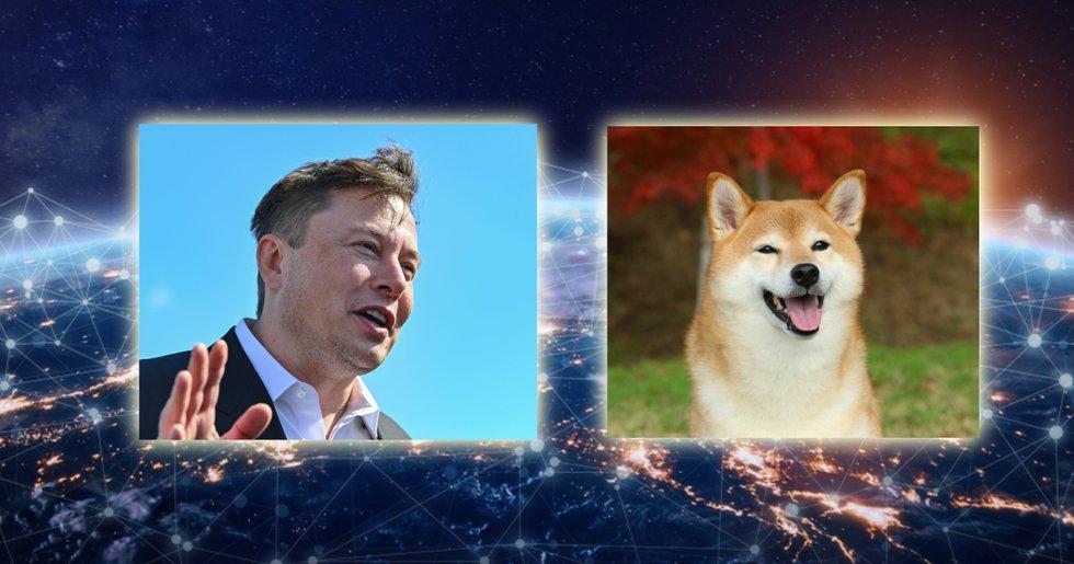 Efter dogecoin: Här är de nya meme-kryptovalutorna som rusar i pris