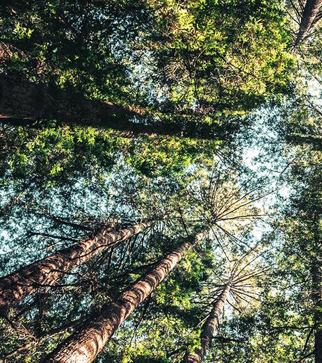 Rosendal omgärdas av vacker natur, parker och skogar