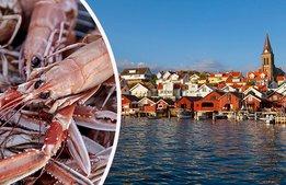 Bohuslän växlar upp kampen om turisterna