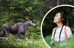 Satsning på kinesisk turism äventyras