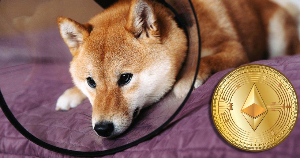 Dogecoin rasar efter Musk-framträdande – ethereum slår nytt prisrekord