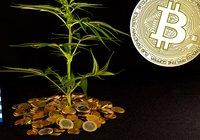 Grekisk miljardär skapar kryptovaluta – backad av cannabis