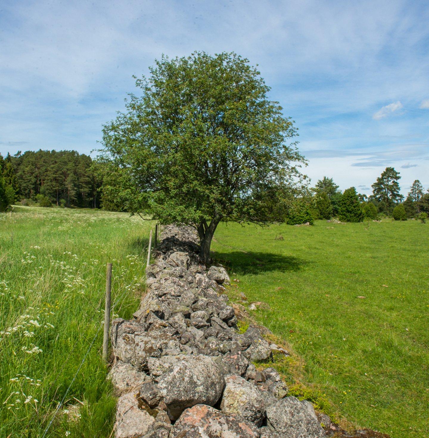 Grazed and ungrazed land in the Swedish farmland, Sweden.