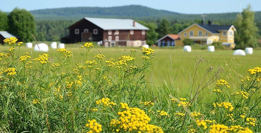 Jordbruksverket har bland annat prioriterat projekt med fokus på miljömässig hållbarhet. Foto: Colourbox