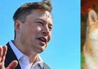 Elon Musk: Dogecoins blockkedja måste bli snabbare