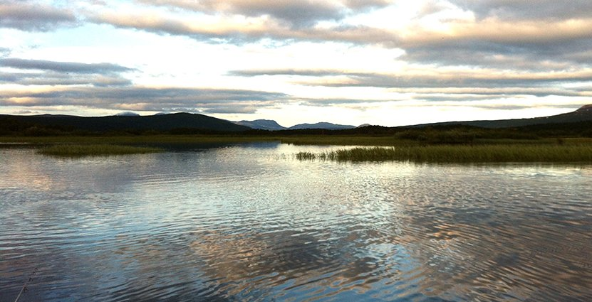 Projektet Lapland - a culinary region, har fått fem miljoner kronor från Jordbruksverket och ska satsa på att bygga en matregion i inlandet. Foto: Colourbox