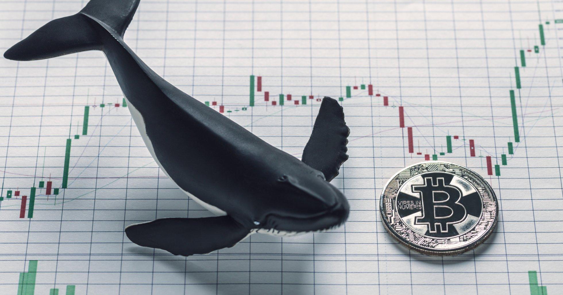 Analys visar: Bitcoins senaste krasch under 10 000 dollar var inte manipulation.
