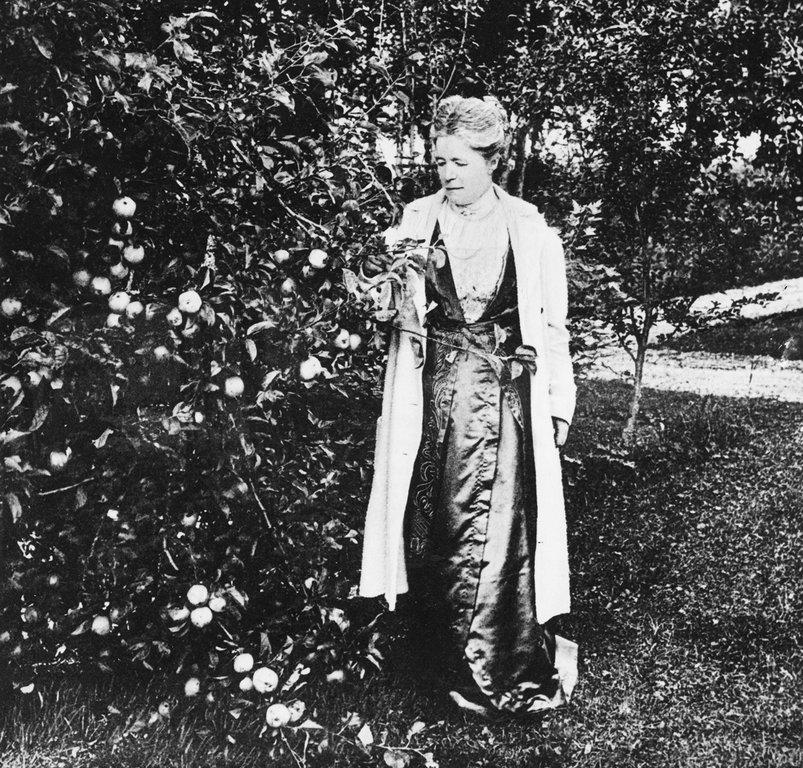 Bild ur boken. Selma Lagerlöf vid ett äppelträd på Mårbacka. Albert Bonniers Förlags arkiv.