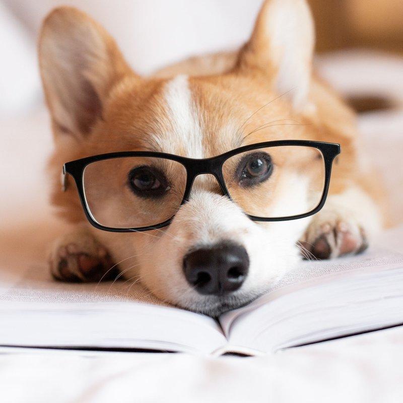 Ny familjemedlem? Här är 52 litterära husdjurnamn