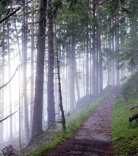 Sätraskogens naturreservat utanför dörren