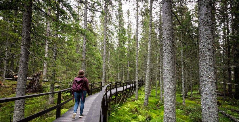 Foto: Lola Akinmade Akerstrom /Höga Kusten Destinationsutveckling