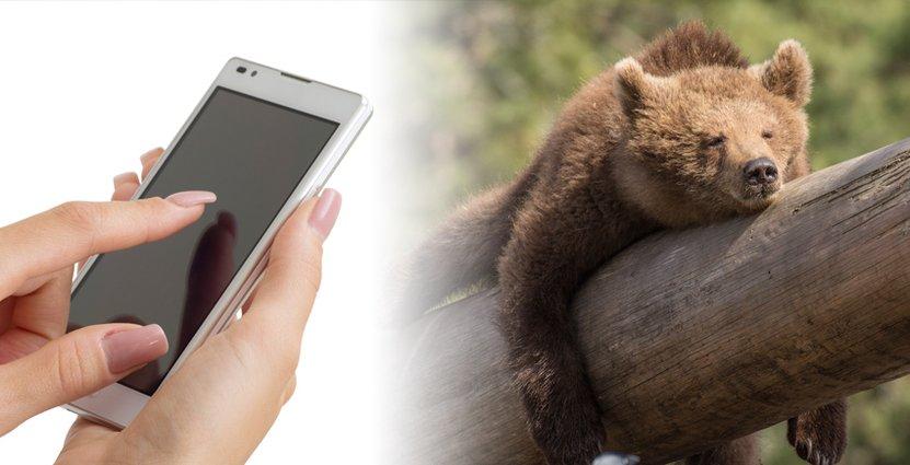 Besökarna ska genom appen kunna se information om djuren när de går förbi inhägnaderna.