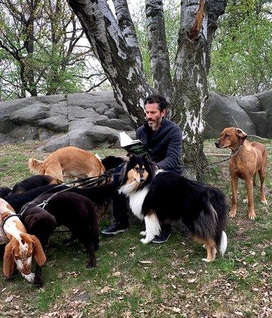 En författare, 10 hundar