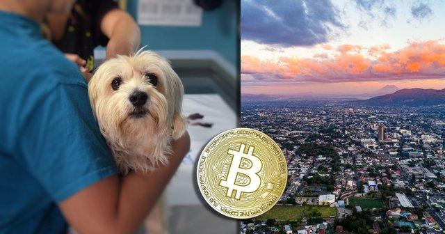 El Salvador använder bitcoinvinst för att bygga jättelikt djursjukhus