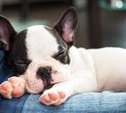 3 sanningar om sömn