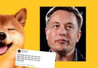 Elon Musk twittrar om nya kryptovalutan baby doge – priset rusar 130 procent