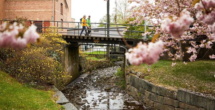Idaginvigs vandringsleden Gotaleden, som går mellan Alinsås och Göteborg. Foto: Pressbild