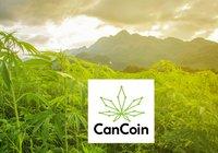Svenskt kryptoprojekt låter dig investera i branschen för laglig cannabis