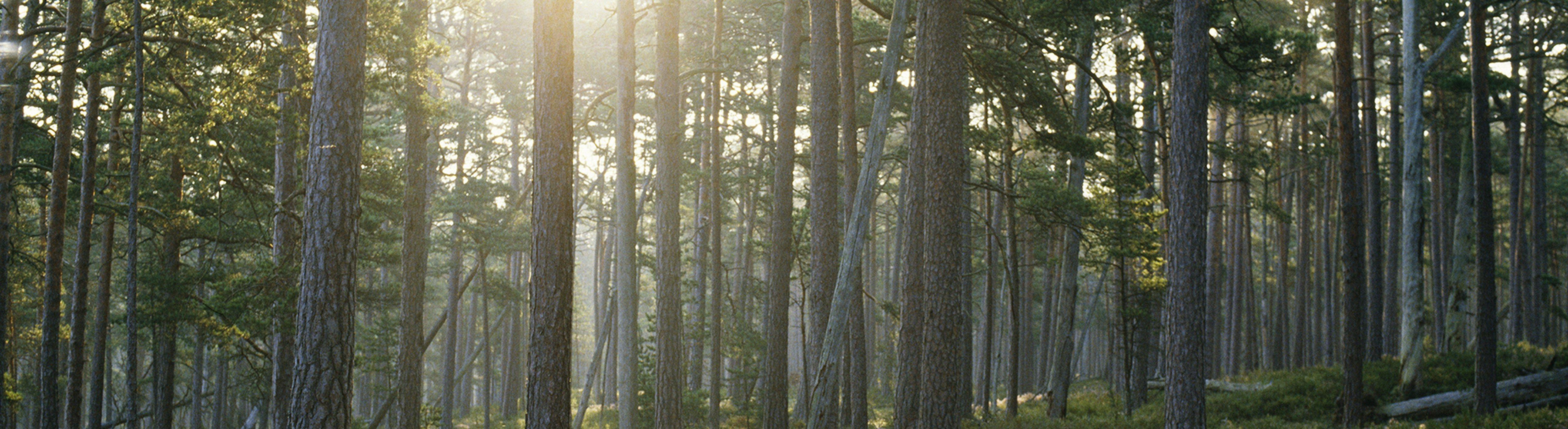 skogsbild_1