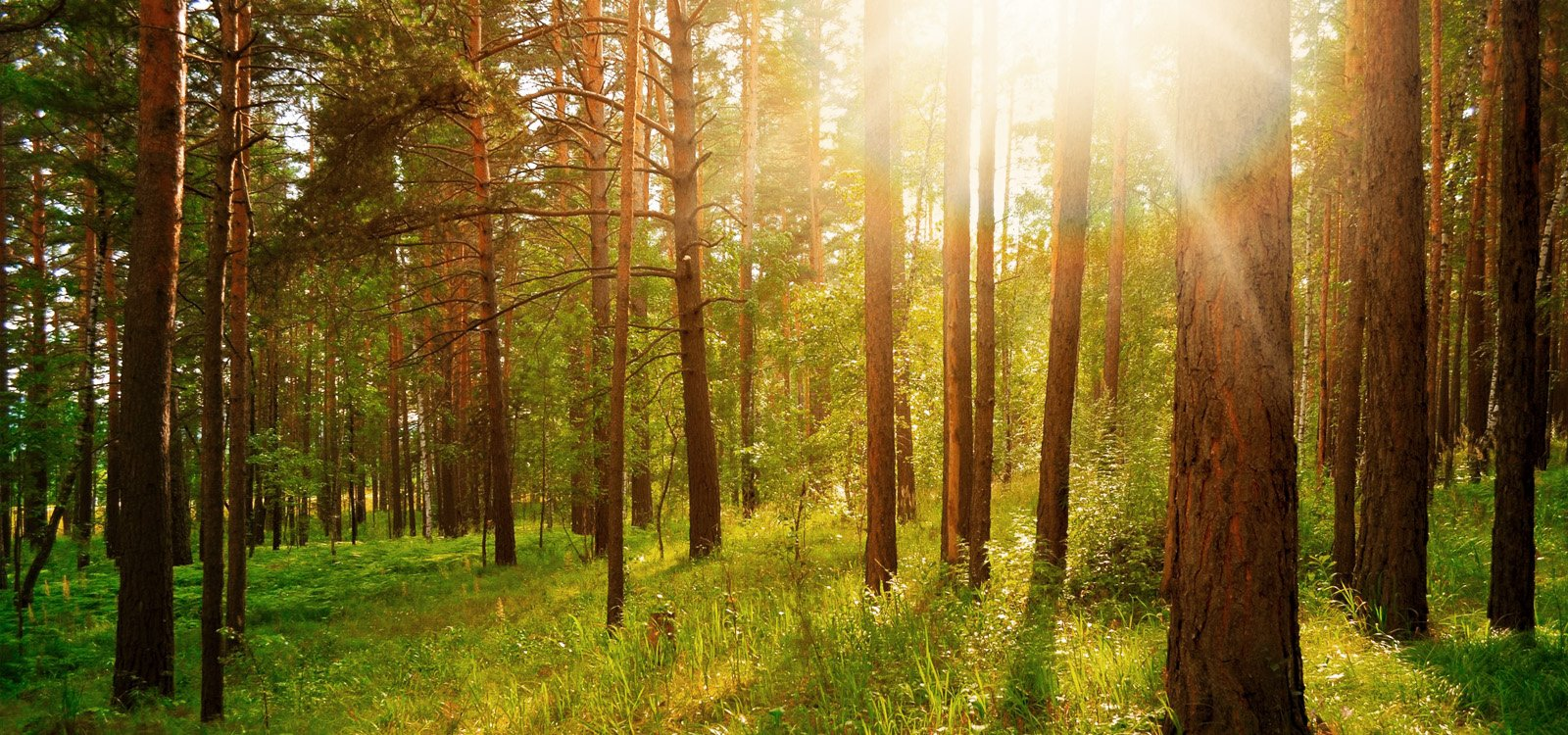 <p>The UK is taking major steps in environmental management, with big plans for quarry restoration.</p>